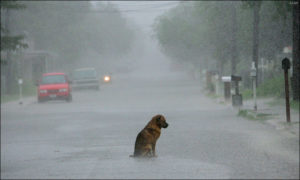 cosa fare se trovi un cane abbandonato