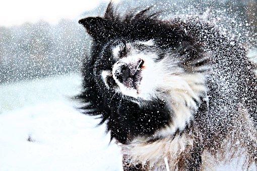 come prendersi cura di un cane in inverno