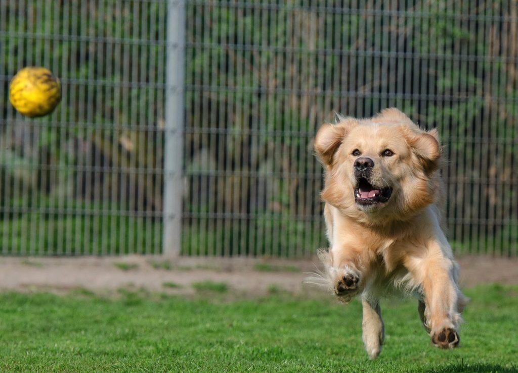 10 modi per rendere il tuo cane felice - Petitamis - Daily Cuddle