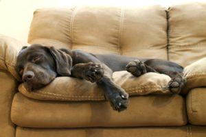 Cani che sognano - 10 curiosità sui cani