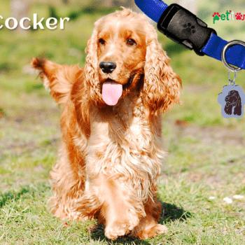 Cocker, un cucciolone intelligente e molto furbo - Petitamis